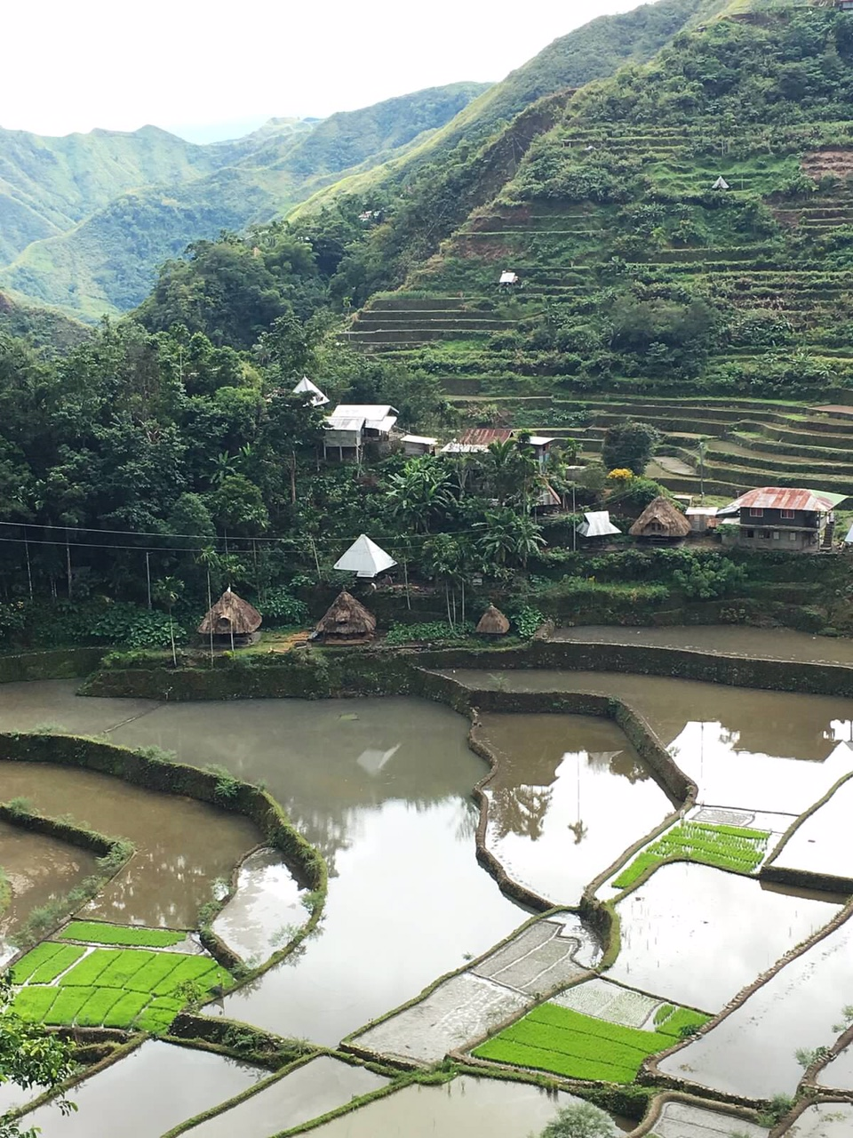 Batad rice terraces in November